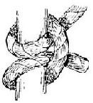 Half-hitch knot